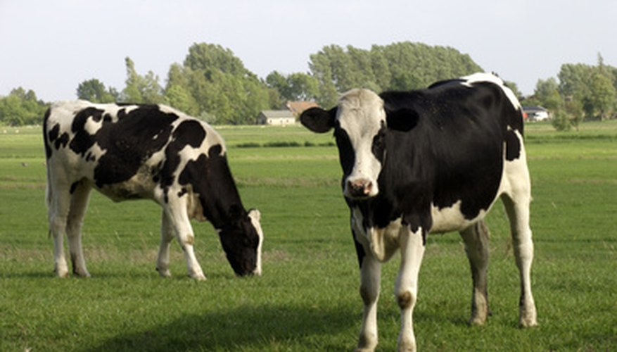Cows provide manure, which is a good fertilizer.