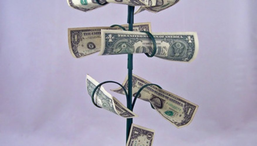 Although the Pachira is called a money tree, it looks nothing like this picture.