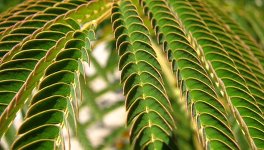 Leaves come in many shapes and sizes; these are compound leaves.