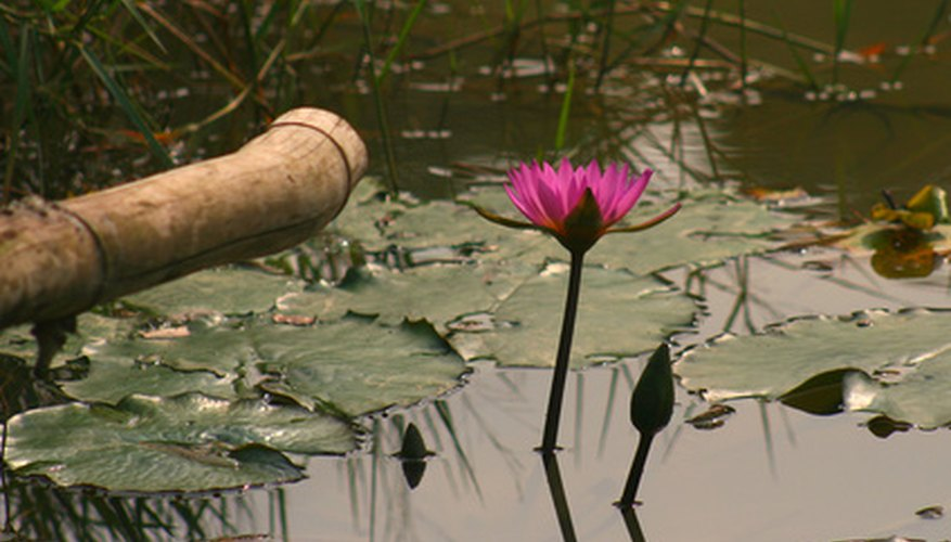 Some aquatic species grow their flowers above the water.