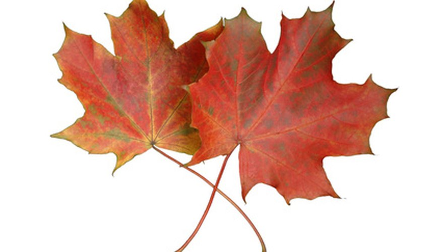Leaf identification in Michigan hinges on a number of aspects.