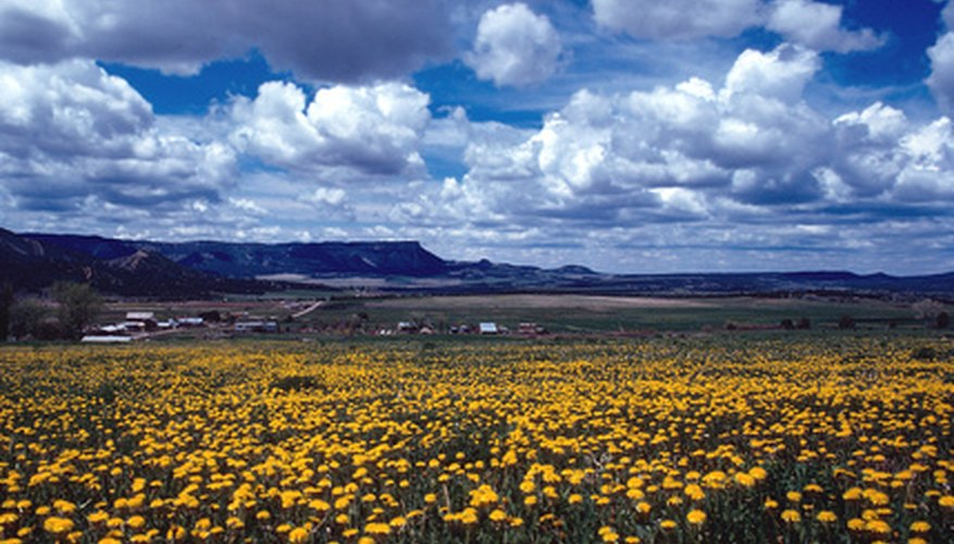 Visit a preserve in the spring to admire the yellow flowers.