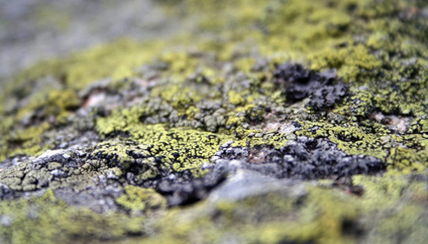 Lichen growth is prevented by sunlight.