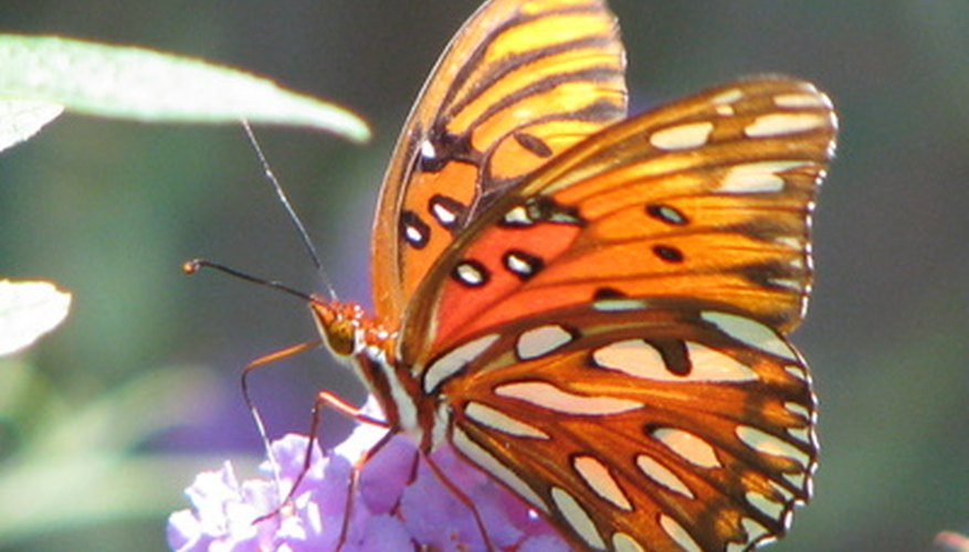A macro shot of a butterfly with a blurred background.