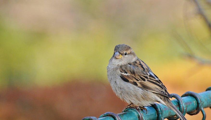 Aprende a ahuyentar a los pájaros de tu jardín.
