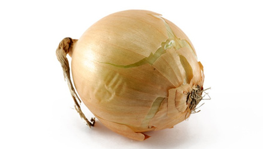 Grow your own onion bulbs in your Florida vegetable garden