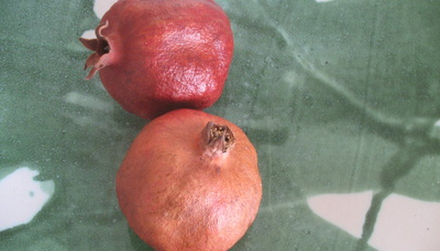 Pomegranate fruit trees grow best in the western half of Oregon.
