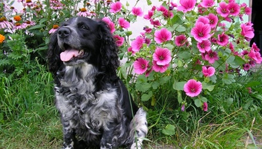 Supervision is required to keep dogs from eating toxic plants.