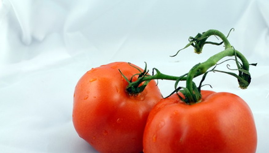 Money Maker tomatoes originated in Bristol, England.
