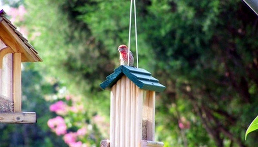 Bird Sense: Lo que es ser un pájaro por Tim Birkhead