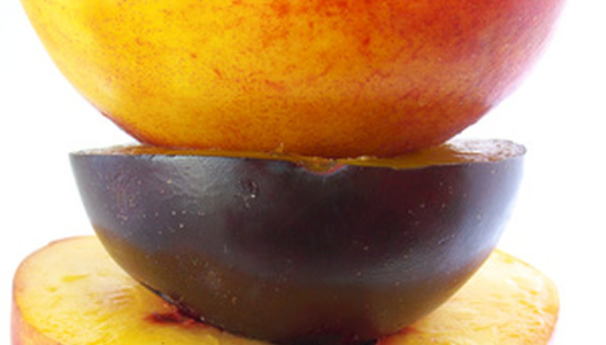 Low-chill peaches grow successfully in Florida.