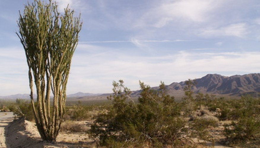The desert is brimming with plants and flowers.
