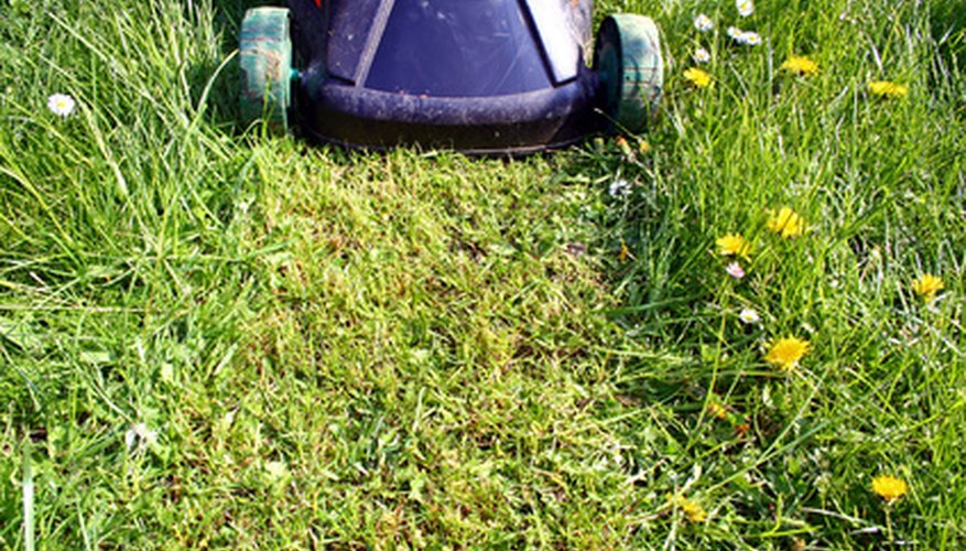 Adjust your push mower cutting height to suit mowing conditions.