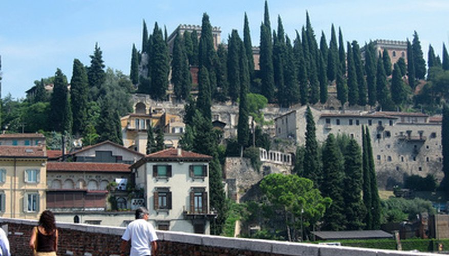 Italian cypress trees crown a hill in Verona, Italy