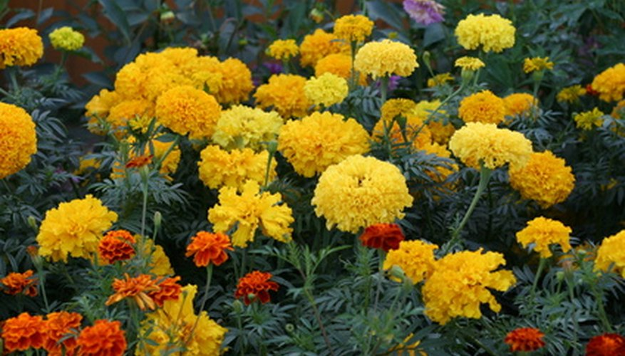 Fertilize your flower gardens for a more colorful show.