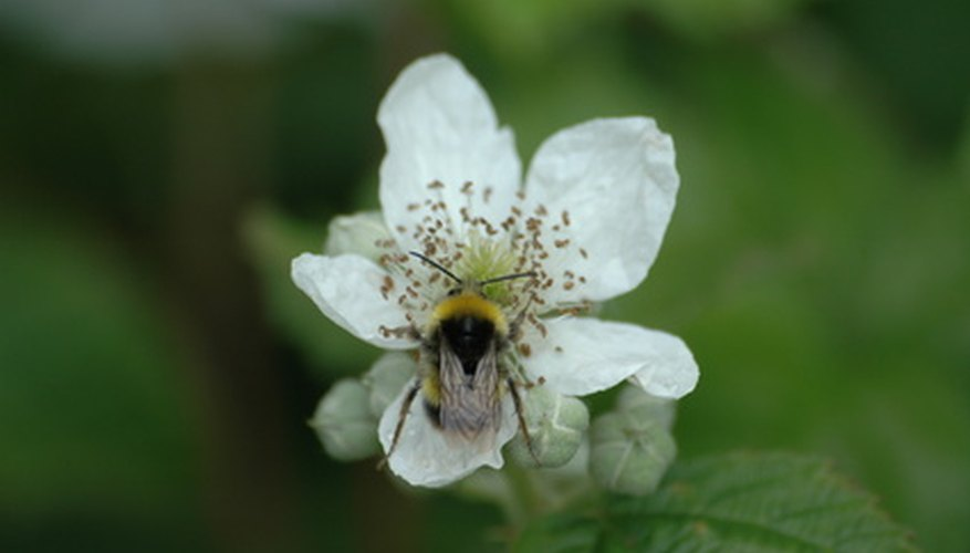 Bees find flowers through sight and smell.