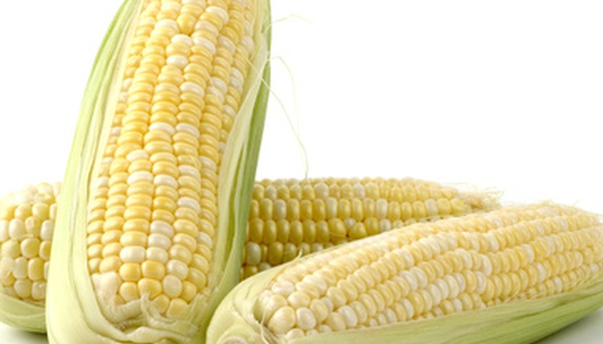 Bi-colored ear of corn