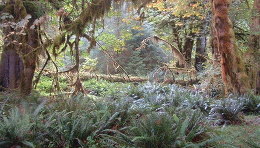 Un bosque tropical.