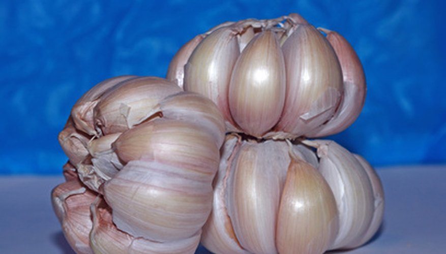 A garlic bulb contains up to 20 cloves.