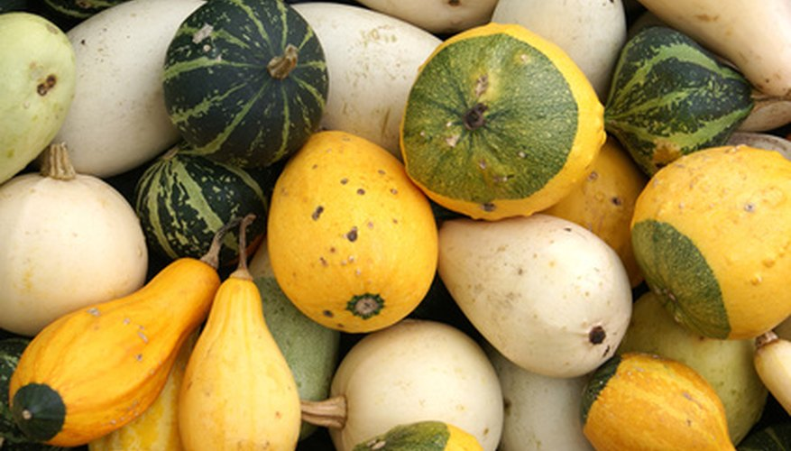 Gourds come in many shapes, sizes and colors.