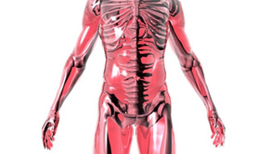 → Consejos para estudiar anatomía del cuerpo humano | Geniolandia