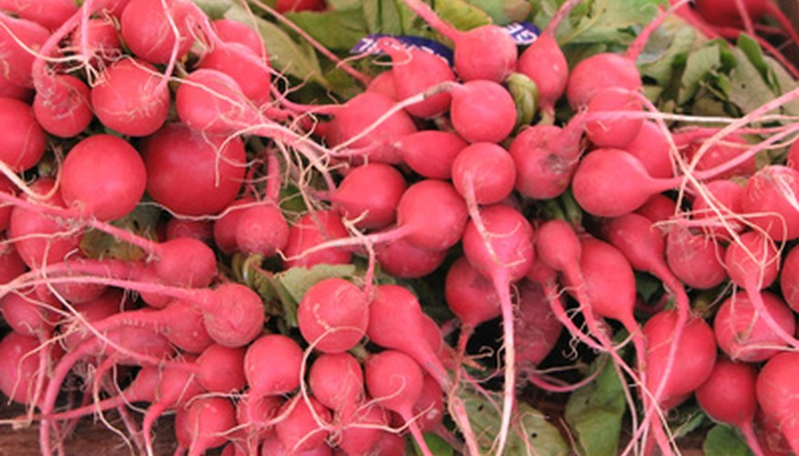 The majority of radish varieties grow best in the cool days of spring.