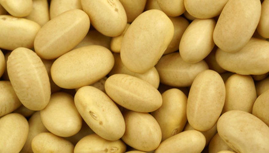 Each bean seed grows to produce many more.