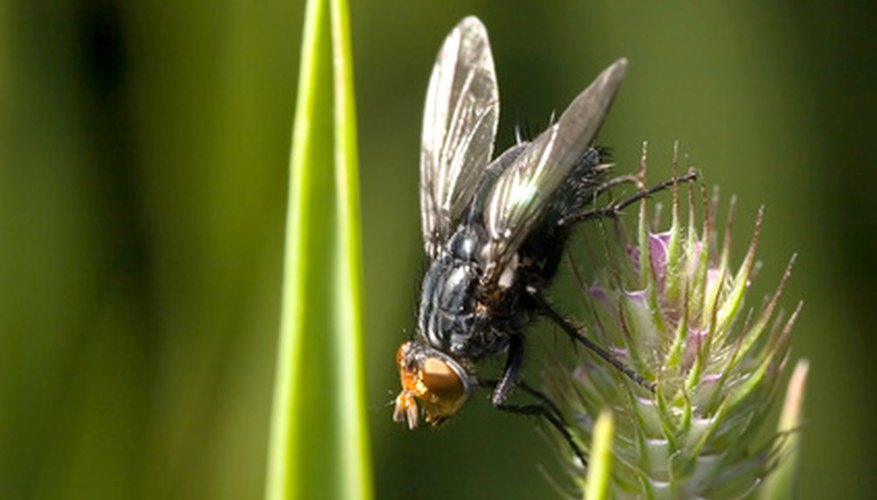 Flies play an important role in pollination.