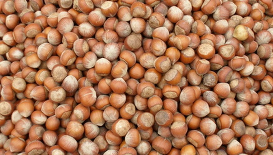 A plethora of hazelnuts can be grown in your own yard.