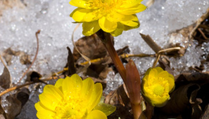 There are many types of flowers that bloom during the winter months.