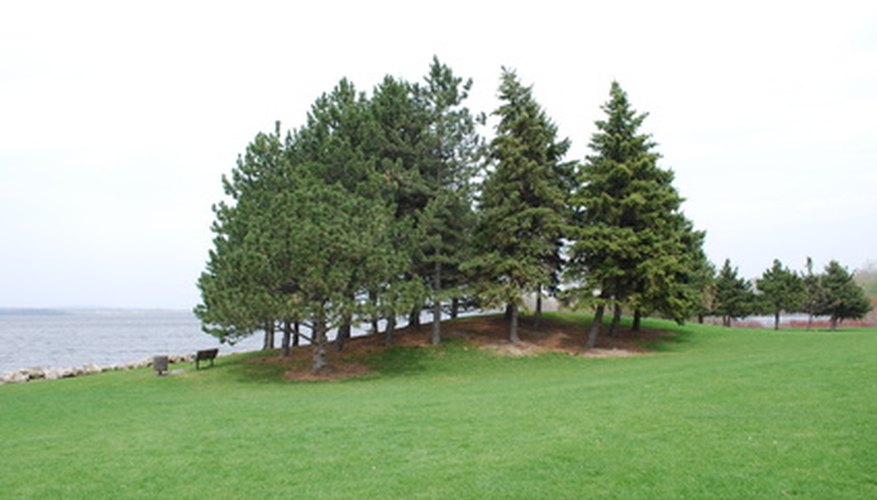 Evergreens include needled and broadleaved plants.