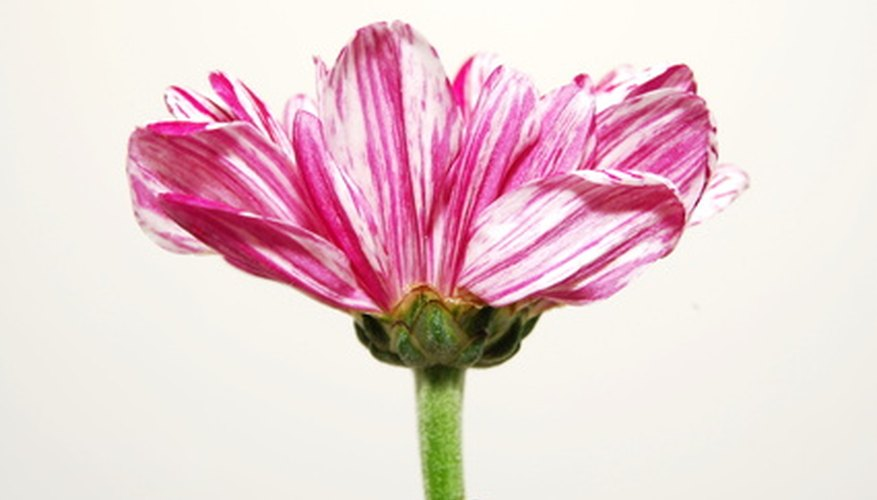 A stem holds up a flower and delivers water and minerals, too.