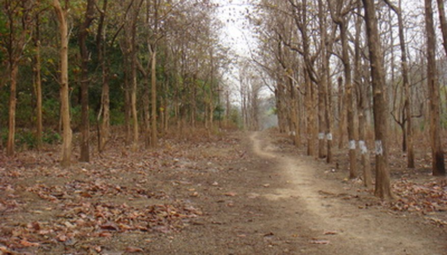 Dry tropical forest of India