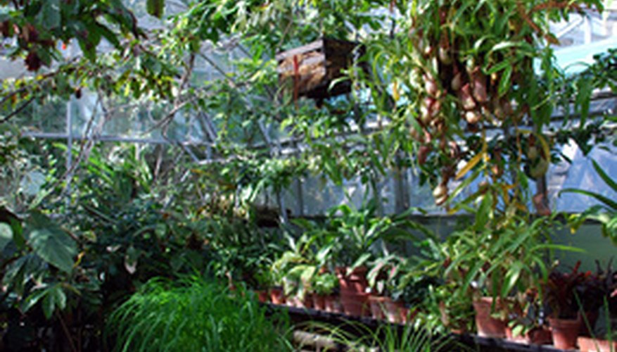 Greenhouse filled with plants.