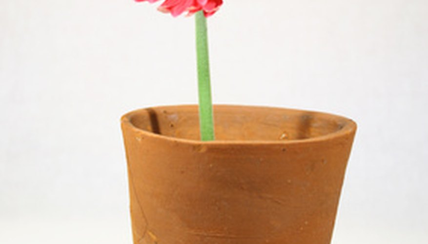Growing a single flower in a pot helps the learning process.