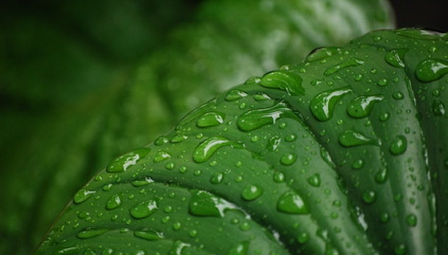 La fotosíntesis tiene lugar en las hojas de las plantas.