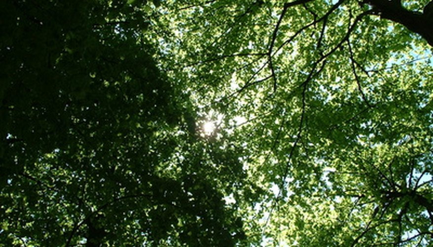 Shade trees can help lower your energy consumption.