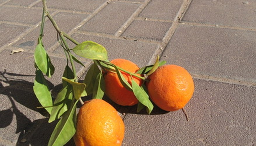 Dwarf orange trees make great patio plants.