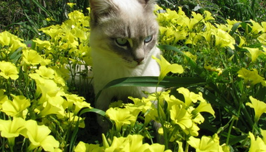 Plants sprayed with insecticides can be harmful to your pets.