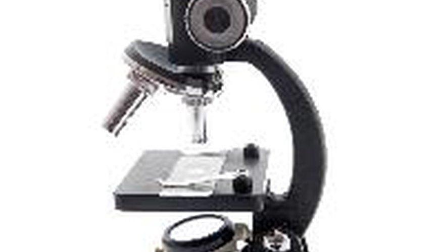 Haz tu propio microscopio.
