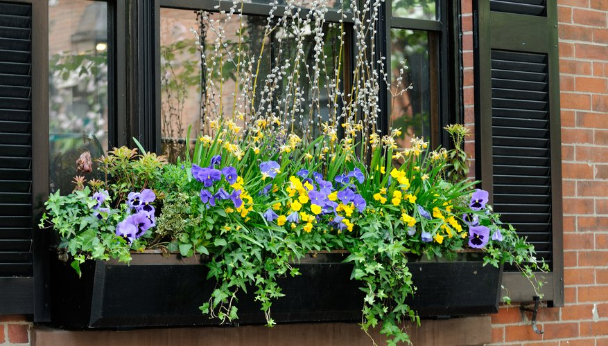 A variety of flowers and plants growing in a window box.