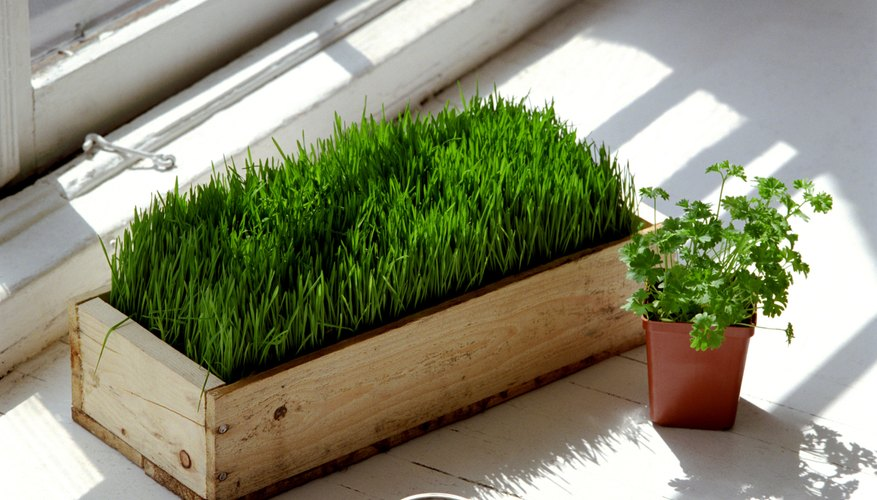 Sprouting grass nearby helps get rid of bugs.