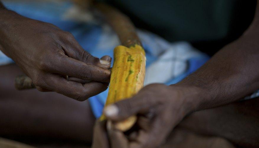 Cinnamon sticks are peeled from the bark of Cinnamomum verum trees.