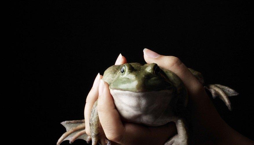 Las ranas pasan por cinco etapas como embriones antes de la eclosión.