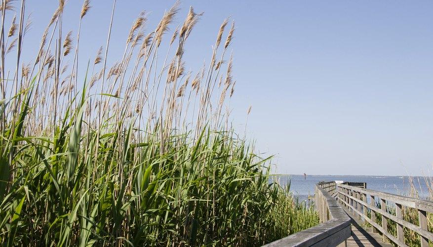 The Atlantic Coastal Plains were created during the Jurassic era.