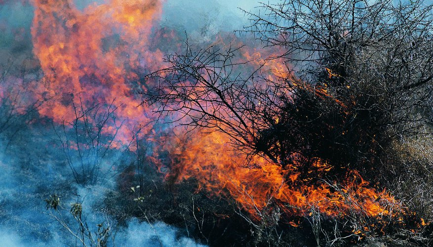 Fires have become more frequent in the Mojave because of invasive plants.