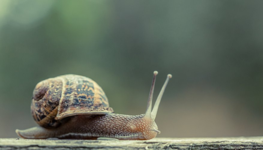 A snail on a wood ledge.