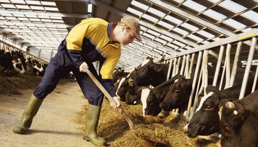 Un granjero que ordeña a las vacas lecheras, además de cultivar trigo requiere más equipo.