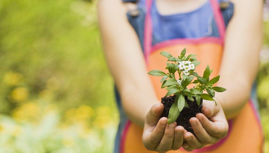 Utiliza gel para plantas para prolongar la vida de tu jardín sin necesidad tanta atención.