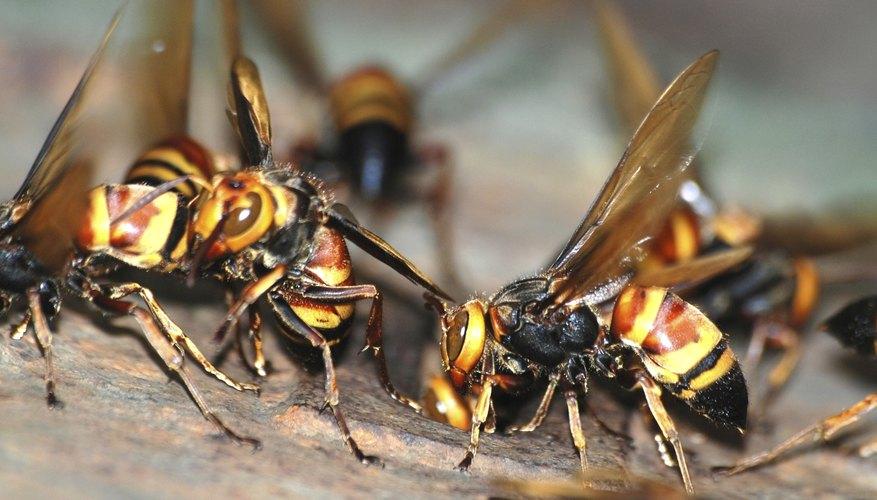 Macro view of wasps